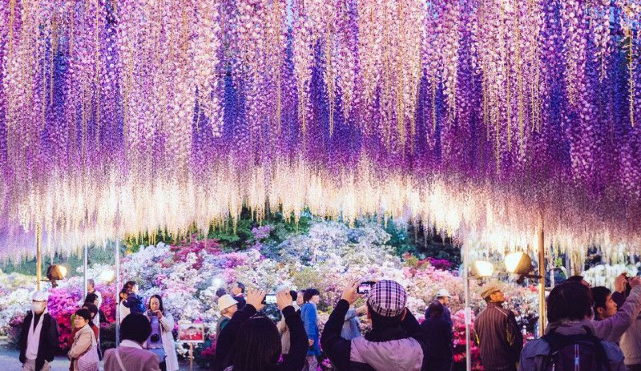 Ashikaga Flower Fantasy, en la prefectura de Tochigi