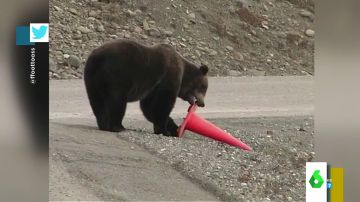 Un oso coloca un cono de tráfico