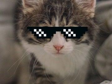 Gafas GIF gato