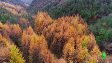 Los bosques, la llave para combatir el cambio climático