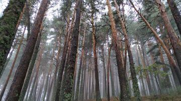 Aumentar la diversidad en los bosques resulta insuficiente ante eventos extremos de sequia