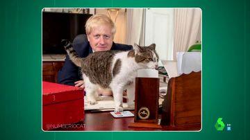 Larry, el gato que custodia la residencia del primer ministro británico, celebra 10 años al servicio del gobierno