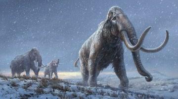 EL ADN mas antiguo jamas secuenciado revela un nuevo linaje de mamuts
