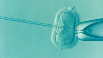 Los disruptores endocrinos afectan a la fertilidad masculina y femenina.