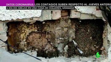 Descubren un enorme panal con 200.000 abejas en la pared de una casa habitada de Ogíjares, Granada