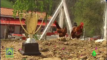 Granja Cabañuca, el lugar donde las gallinas predicen el resultado de la final de Copa entre la Real y el Athletic