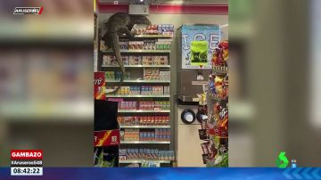 Un lagarto gigante irrumpe en un supermercado y lo destroza todo a su paso