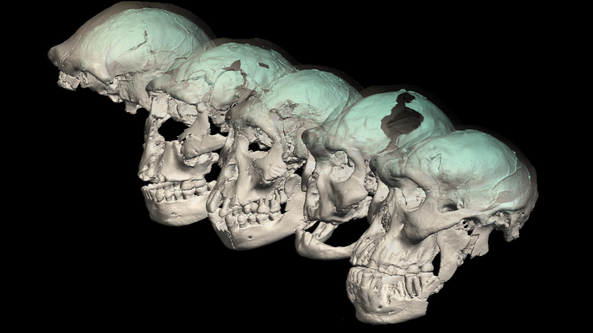 Los rasgos que distinguen al cerebro humano moderno surgieron despues de su dispersion desde Africa