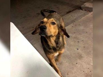 El brutal asesinato a machetazos de un perro provoca una ola de indignación en las redes