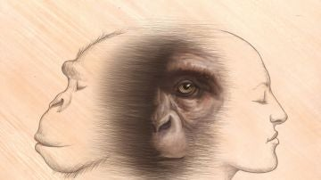 Chimpances y humanos comparten un ancestro comun que vivio a finales del Mioceno