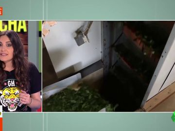 Té matcha: Boticaria García da las claves de la bebida que vuelve locos a los famosos, desde Lady Gaga a Messi