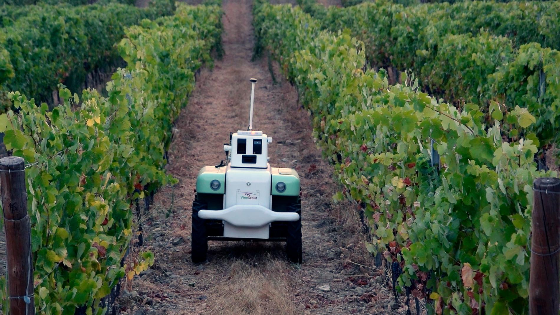 Robot moviéndose entre la vides