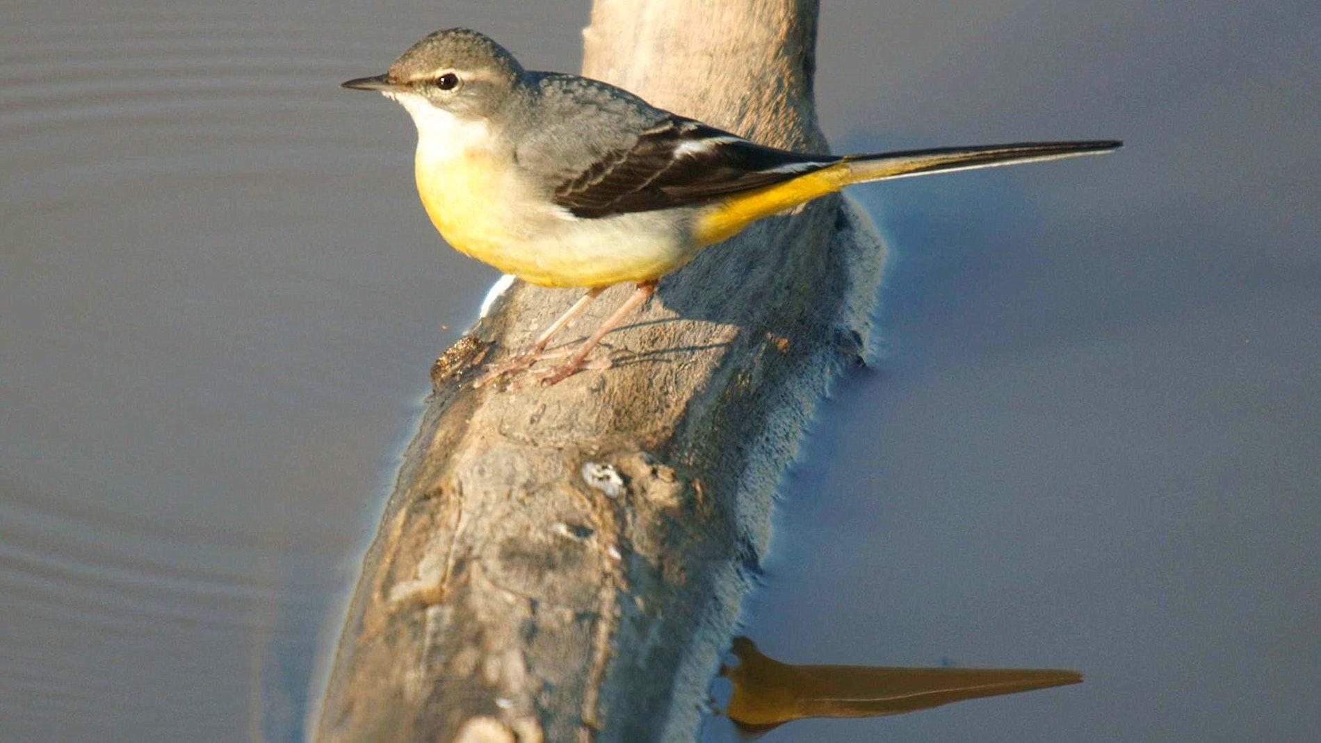La dieta especializada de peces y aves acuaticas los hace vulnerables ante la degradacion de los rios