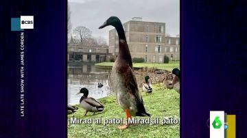 Long Boi, el pato británico que se ha vuelto viral por su enorme estatura