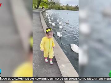 Un grupo de cisnes persigue a una niña disfrazada de pato por un parque