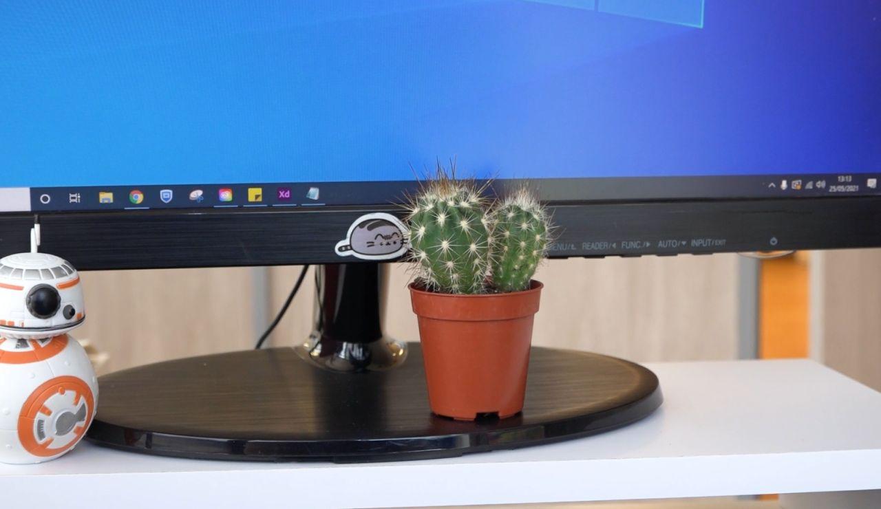 Cactus en una pantalla