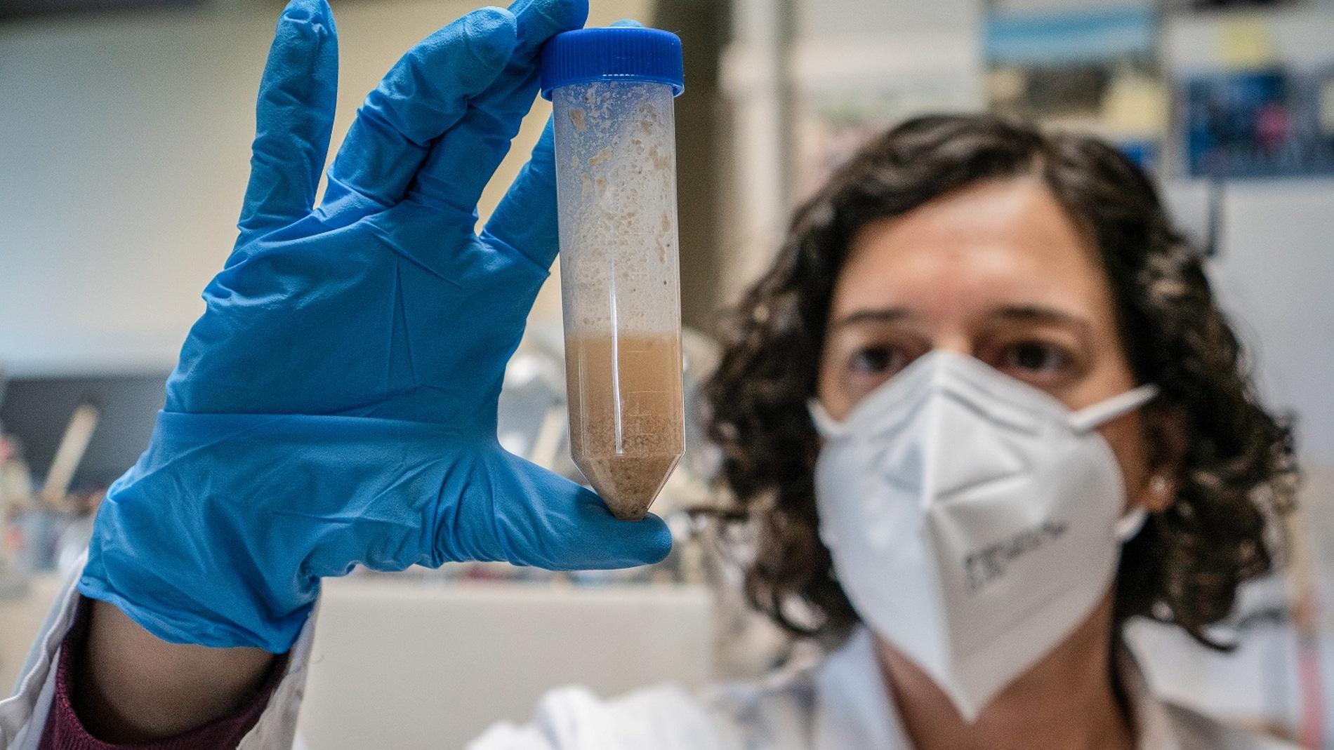 investigadora con un tubo de muestreo de gluten