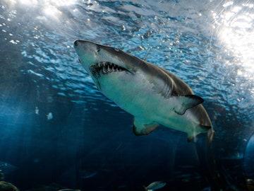 """Un superviviente de ataque de tiburón recuerda su terrible episodio: """"Fue como un perro agarrando un hueso"""""""