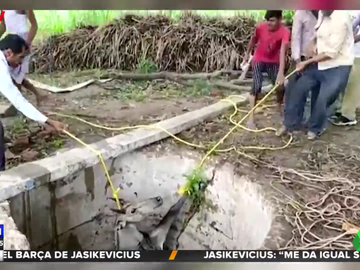 El angustioso rescate de un antílope tras caer a un pozo