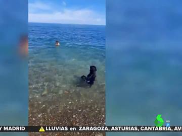 La reacción de dos perros al ver que su dueño se ahoga en la playa