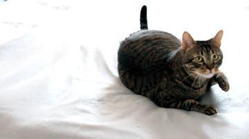 ¿Qué piensa tu gato?