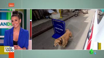 Un perro sigue a la ambulancia en la que iba su dueña