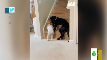 El enternecedor vídeo de un perro cuidado a un bebé: así evita que suba las escaleras