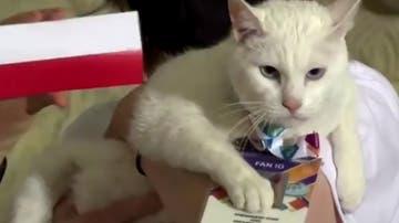 Aquiles, el gato que predice los resultados de la Eurocopa