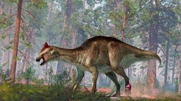 Hadrosaurio enfermo