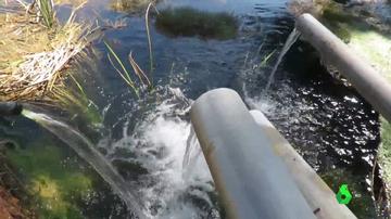 """El TJUE sentencia que España ha permitido la sobreexplotación del agua de Doñana provocando un """"grave daño"""" a su biodiversidad"""