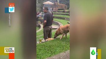El divertido 'robo' de un perro a su dueño: le quita la pizza sigilosamente mientras mira a otro lado