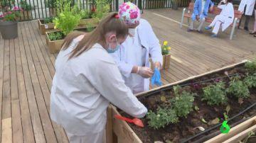 Así es la terraza-huerto pionera que ayuda a los pacientes de Psiquiatría