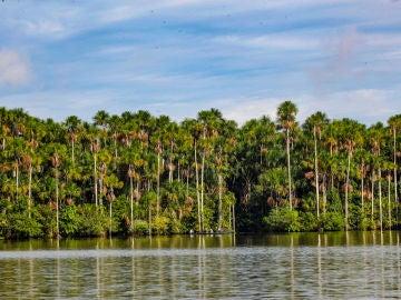 Reserva Nacional Tambopata