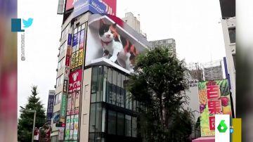 El impactante gato en 3D que aterroriza a los turistas en Tokio