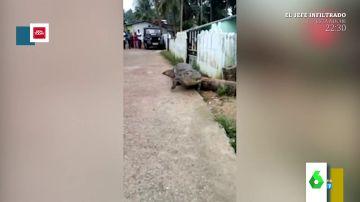 Las increíbles imágenes de un cocodrilo paseándose por un pueblo de la India