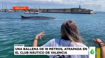 La espectacular aparición de una ballena de 18 metros en el puerto de Valencia