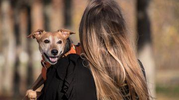 Sí, los perros entienden a los humanos, y este estudio lo demuestra