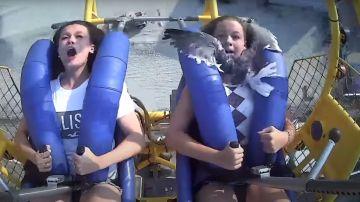 Una gaviota 'ataca' a una joven en una atracción