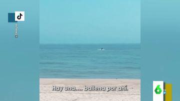 El espectacular vídeo en el que Thalia muestra el coletazo de una ballena en plena playa