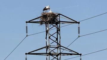 Dos cigüeñas permanecen junto al nido en un poste del tendido eléctrico