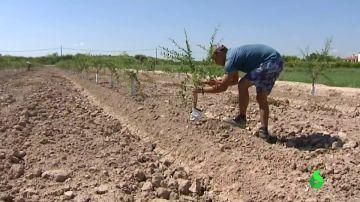 El Gobierno le declara la guerra a trabajar con calor: agua, crema solar y descansos para obreros y agricultores