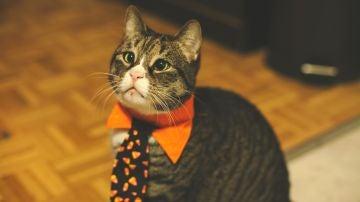 La fiesta de un gato despierta a un barrio de Lugo: el animal encendió el equipo musical al máximo