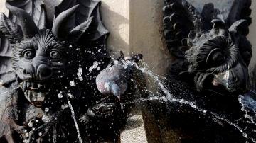 Una paloma se refresca en una fuente de El Retiro en plena ola de calor.