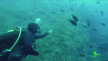 CLASES BUCEO