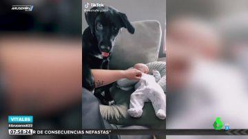 Un perro cuida tanto a un bebé que impide que se le acerque hasta la propia madre