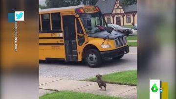 El adorable vídeo de un perro que espera al autobús escolar