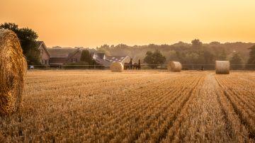Imagen de archivo de un campo de maíz.