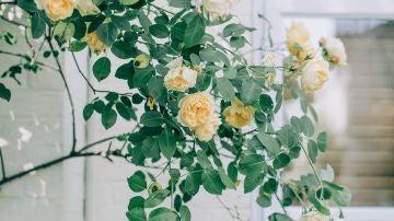 Plantas de exterior fáciles de cuidar y bonitas
