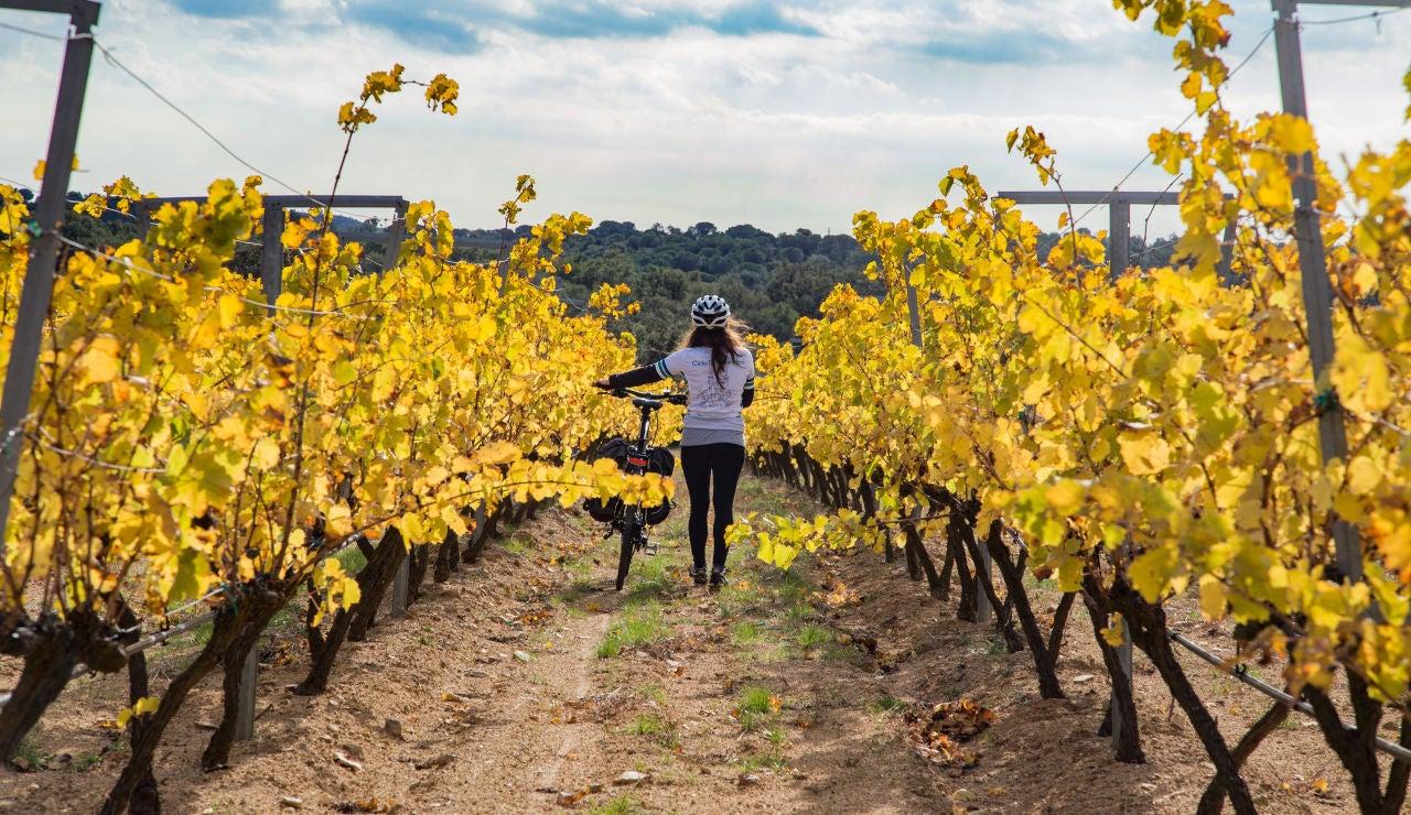 Excursión en bici entre viñedos