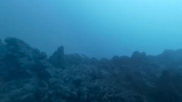 Imágenes submarinas de la fajana de La Palma